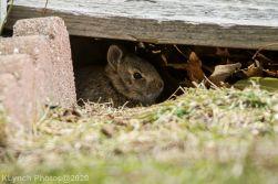 Rabbit_34