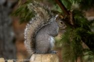 Squirrel_9
