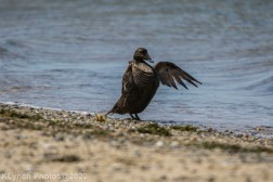 Duck_6