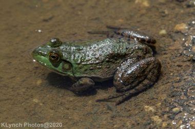 Frog_10