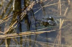 Frog_3