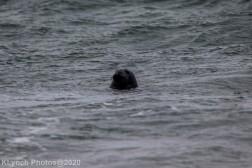 Seal_1