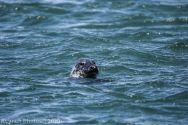 Seal_3
