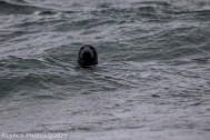 Seal_4