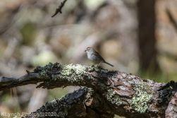 Sparrow_2