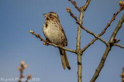 Sparrow_5