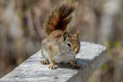 squirrl_1