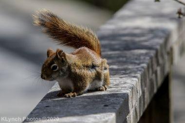 squirrl_10