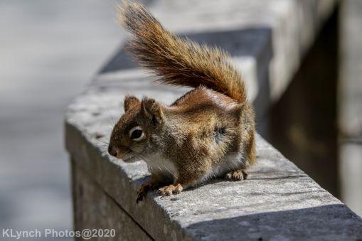 squirrl_11