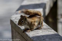 squirrl_12