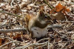 squirrl_13