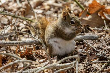squirrl_14