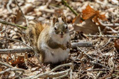 squirrl_15