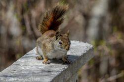 squirrl_2