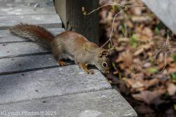 squirrl_3