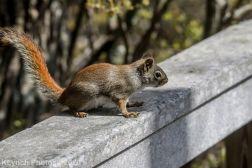 squirrl_4