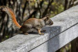 squirrl_5