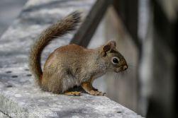 squirrl_6