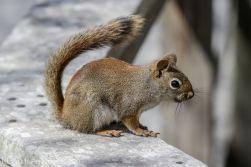 squirrl_7