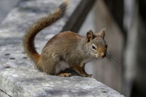 squirrl_8