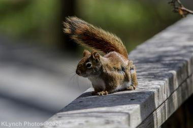 squirrl_9